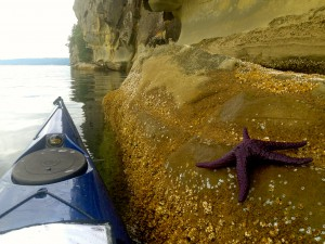 Kayaking among the cliffs and sea stars