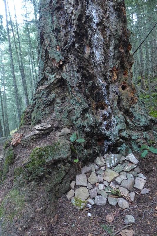 Tree with stones