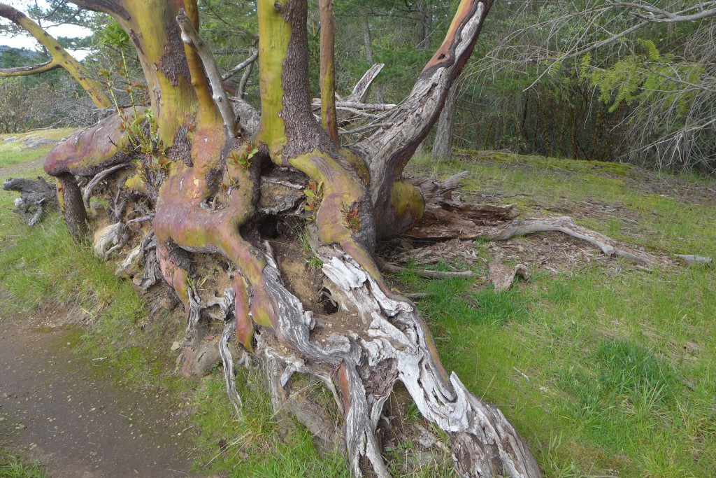 roots revealed