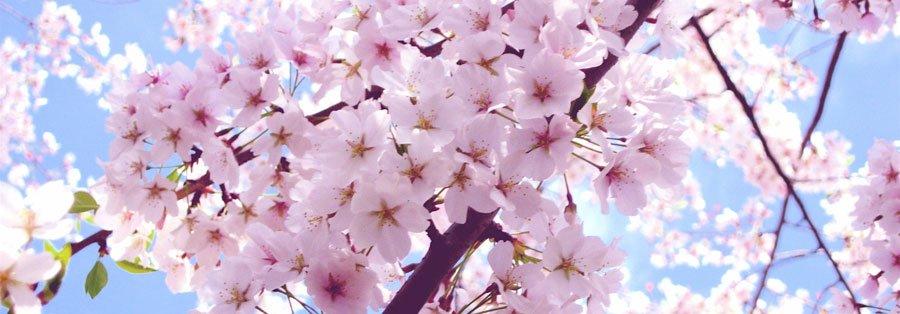 Salt-Spring-Blossom