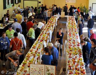 Salt-Spring-Apple-Festival-Zaira-Valeria-15-32